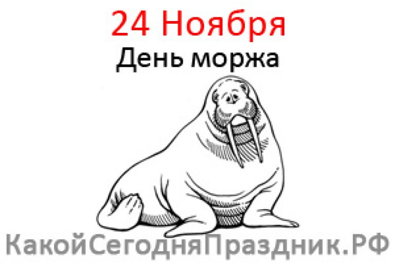 Открытки пожеланием, открытки с моржами
