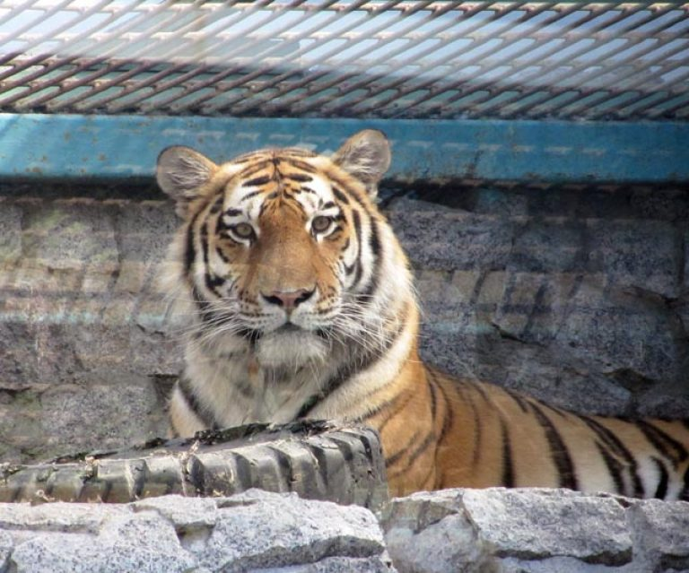 зоопарк санкт-петербурге картинки